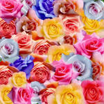 Texture with Roses by allison731