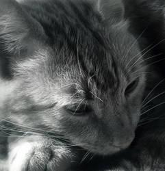 B-W Cat