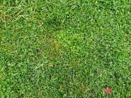 Green Grass-II