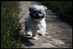 Molly Running at fur pelt