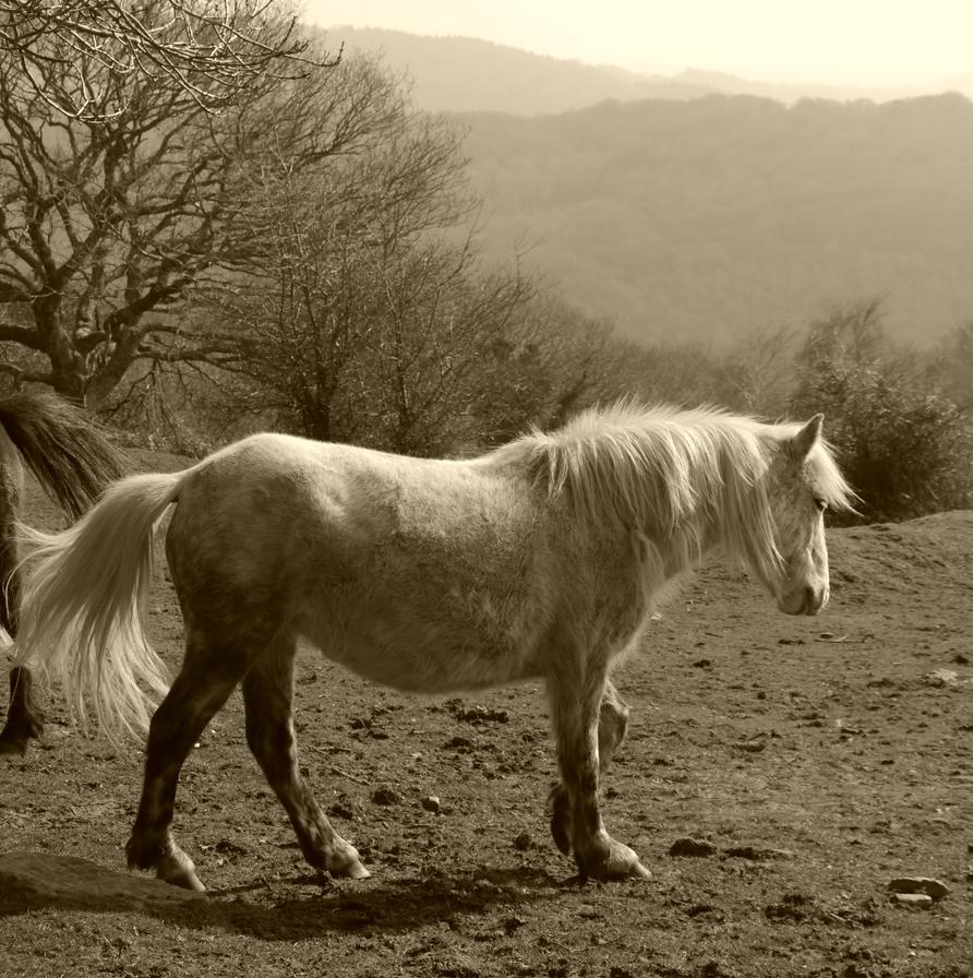 Dartmoor Pony by Vickimai