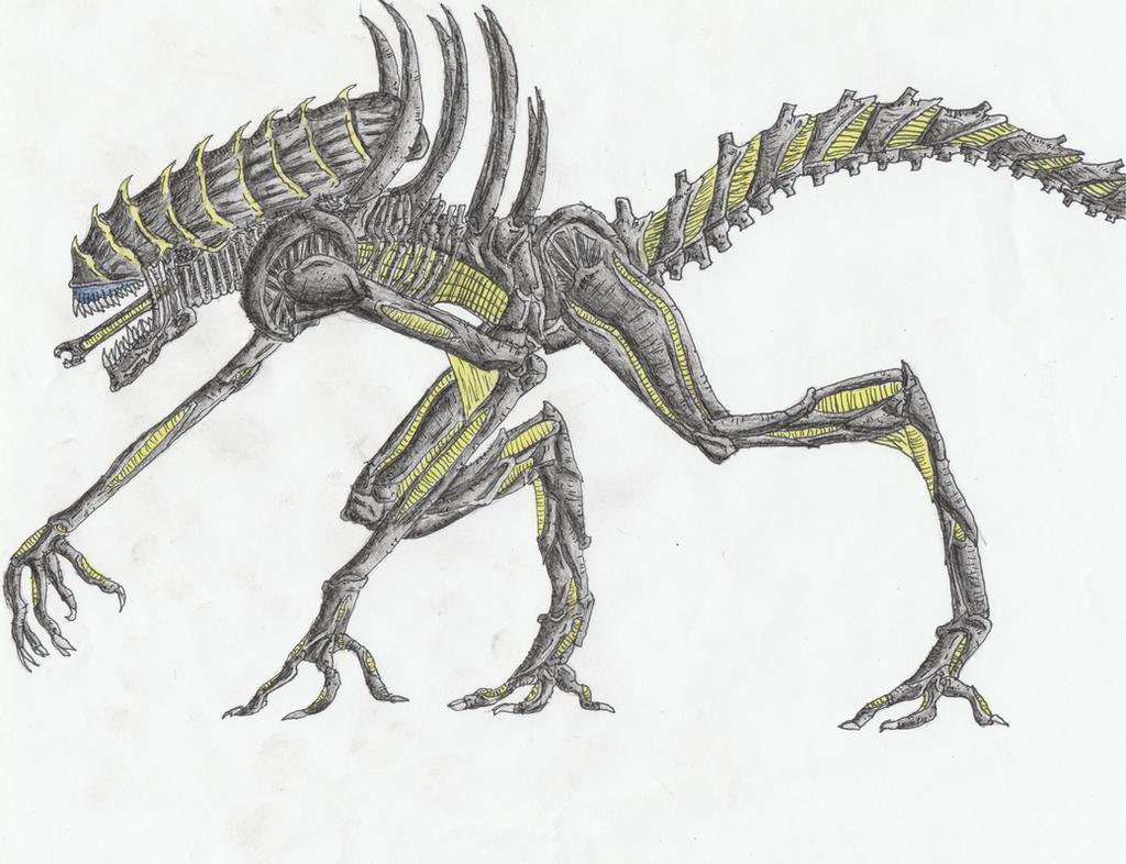 Reaver Xenomorph Runner V 2 by Sylizar on DeviantArt