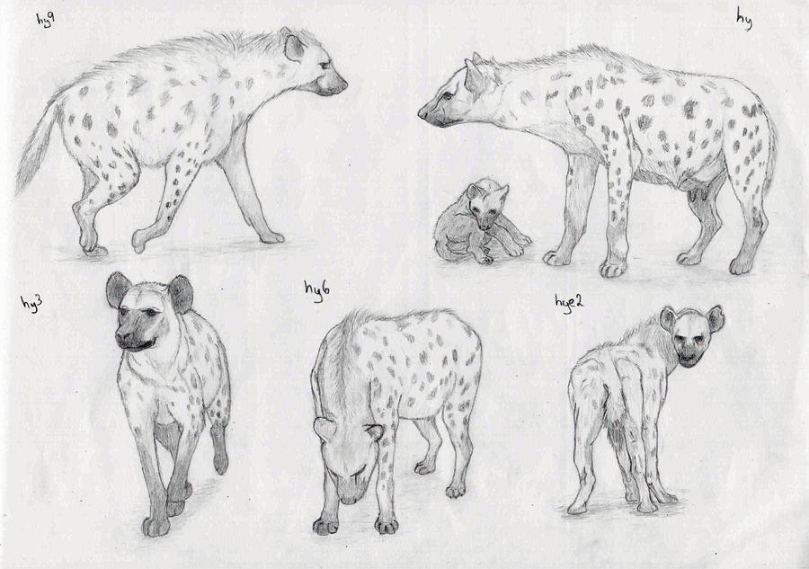 hyenas by sheydy