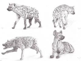 Hyenas study No.5 by Sheydy