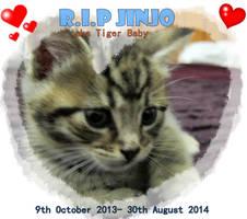 In loving memory- Jinjo- Tiger Baby