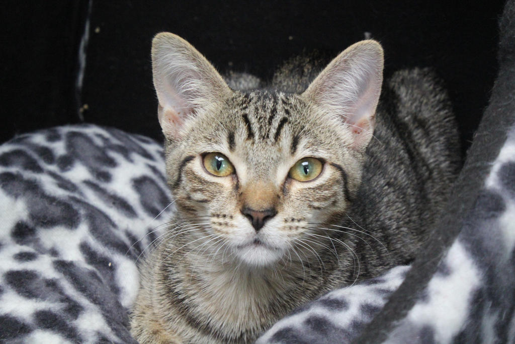 RSPCA 1 by midnight-storm666
