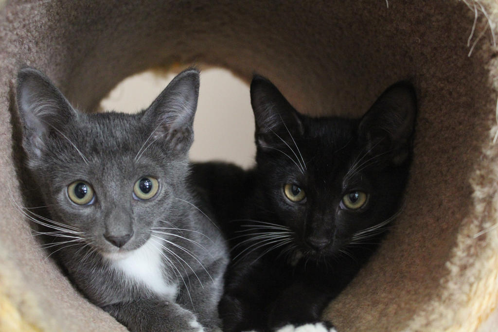 RSPCA 2 by midnight-storm666