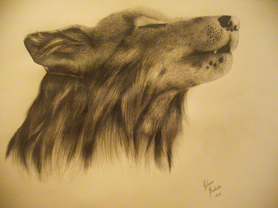 Wolf by Lena-LU