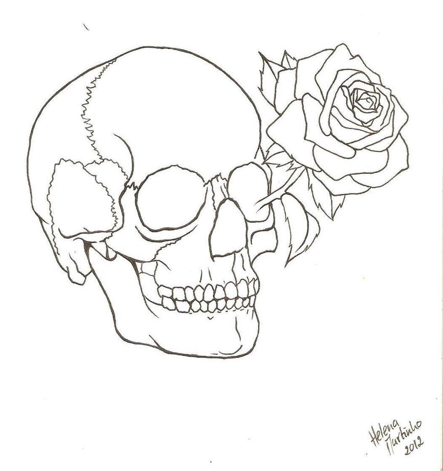 Skull Line Drawing Easy : Skull and rose outline by lena lu on deviantart