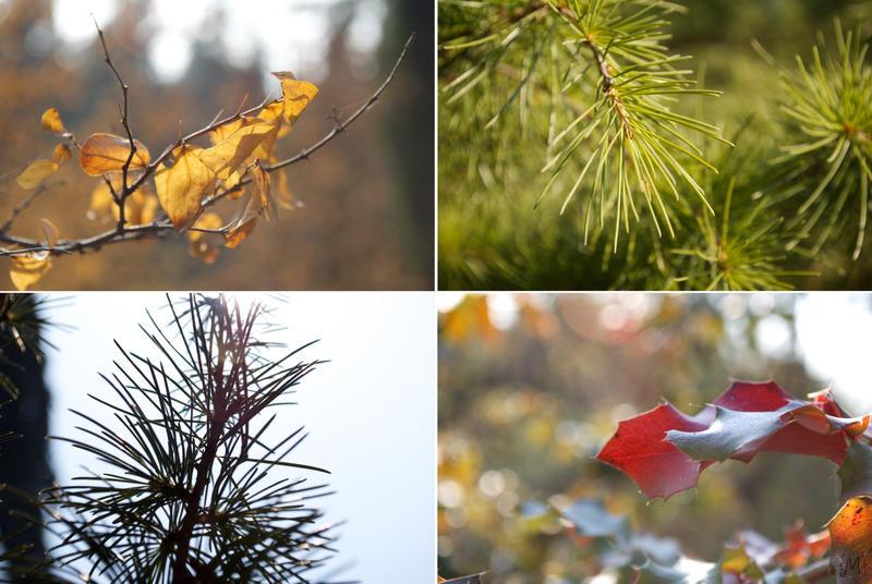 Autumn. by Anelgim