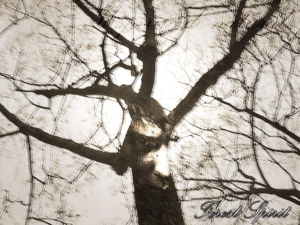 Forest Spirit by necron