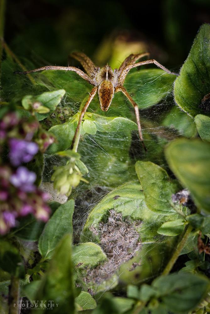 Spider of pray by MissFlykt