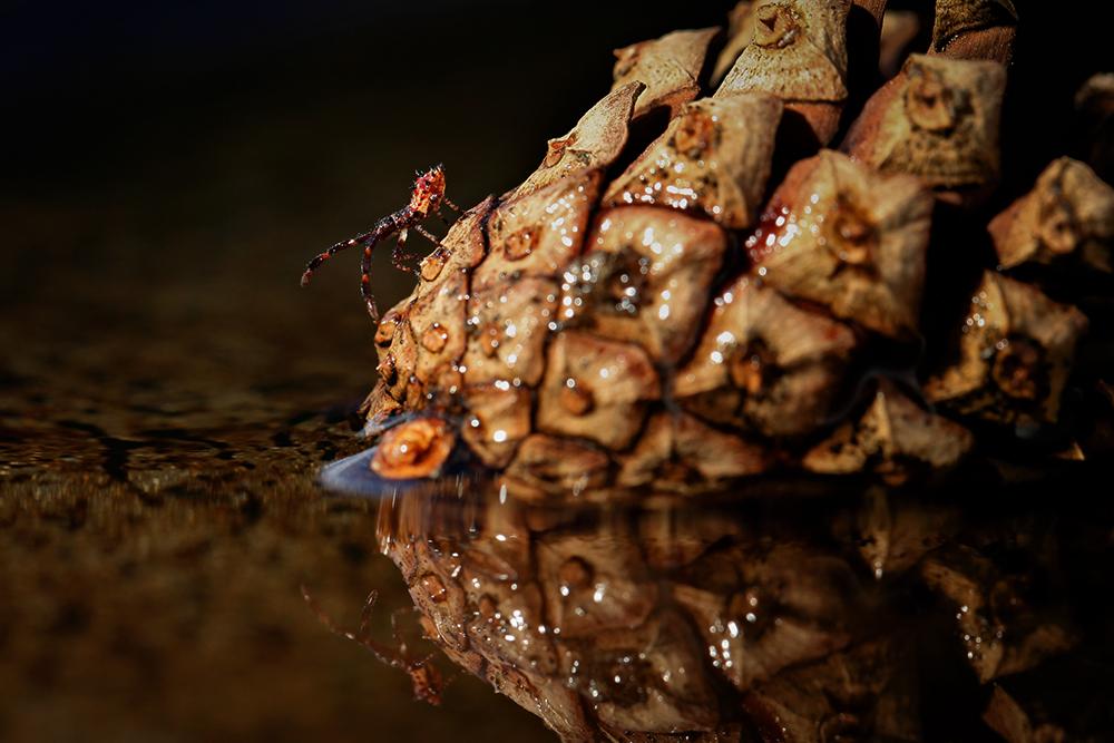 Coleopteran by MissFlykt
