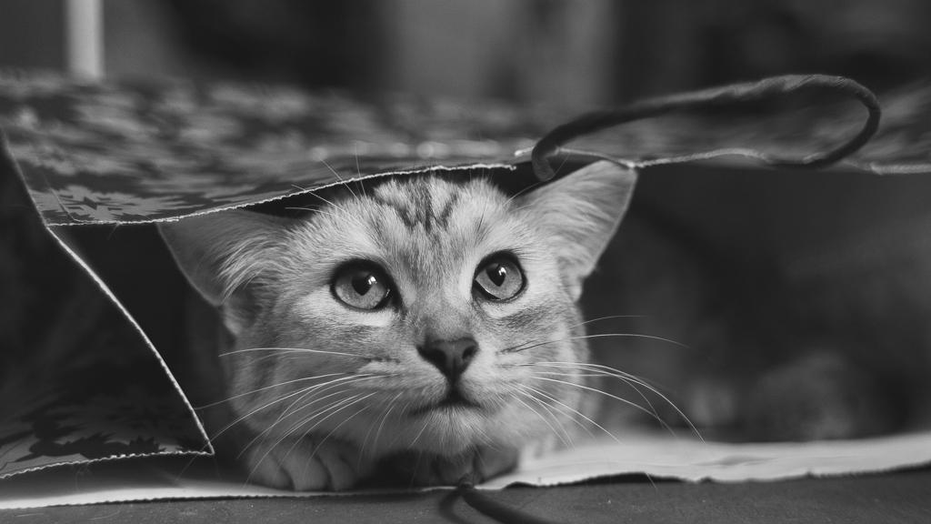 Cat in the bag by bagirushka