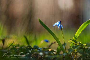 Spring Time by Bagirushka