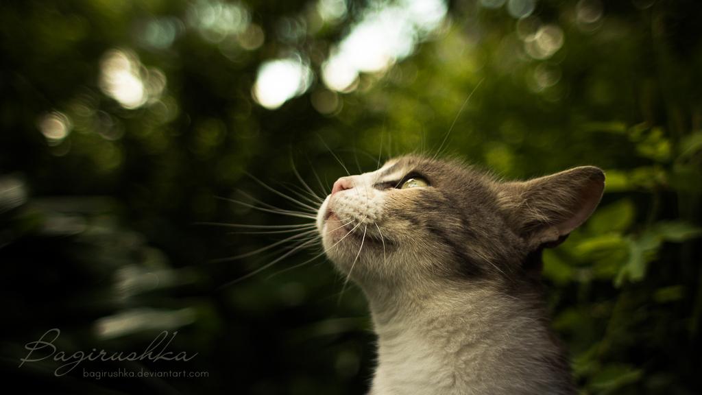 Atelier de Snoopy. 1/2  In_the_magic_forest_by_bagirushka-d7mwajj