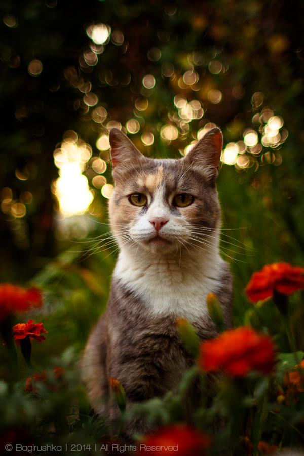 Flower Evening by Bagirushka