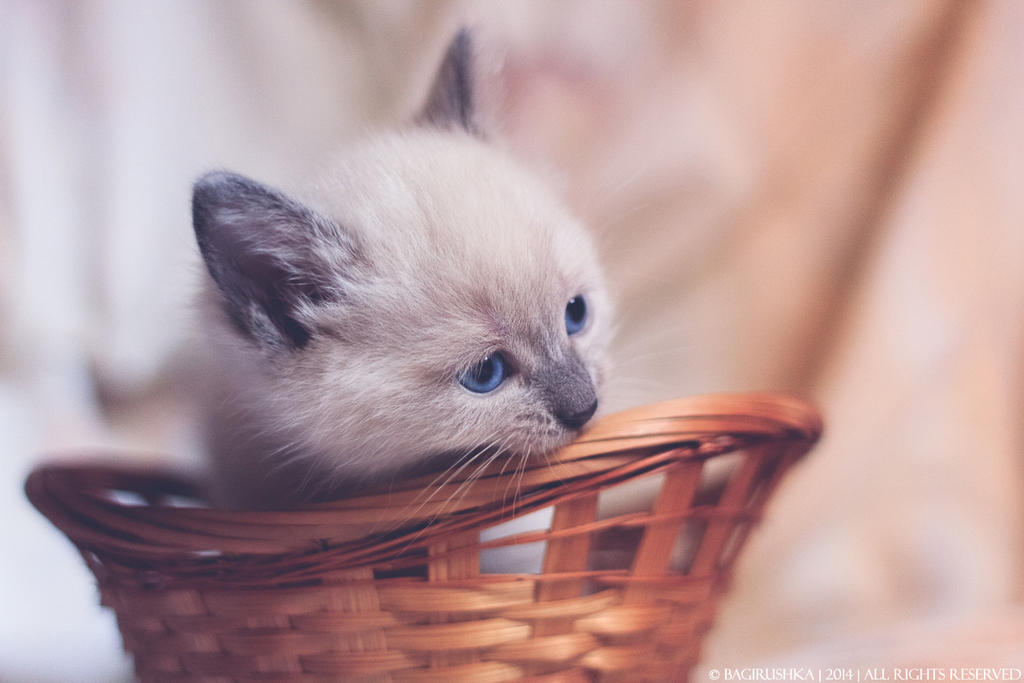 I'll eat you, basket! by bagirushka