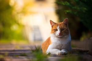 Red Cat by Bagirushka