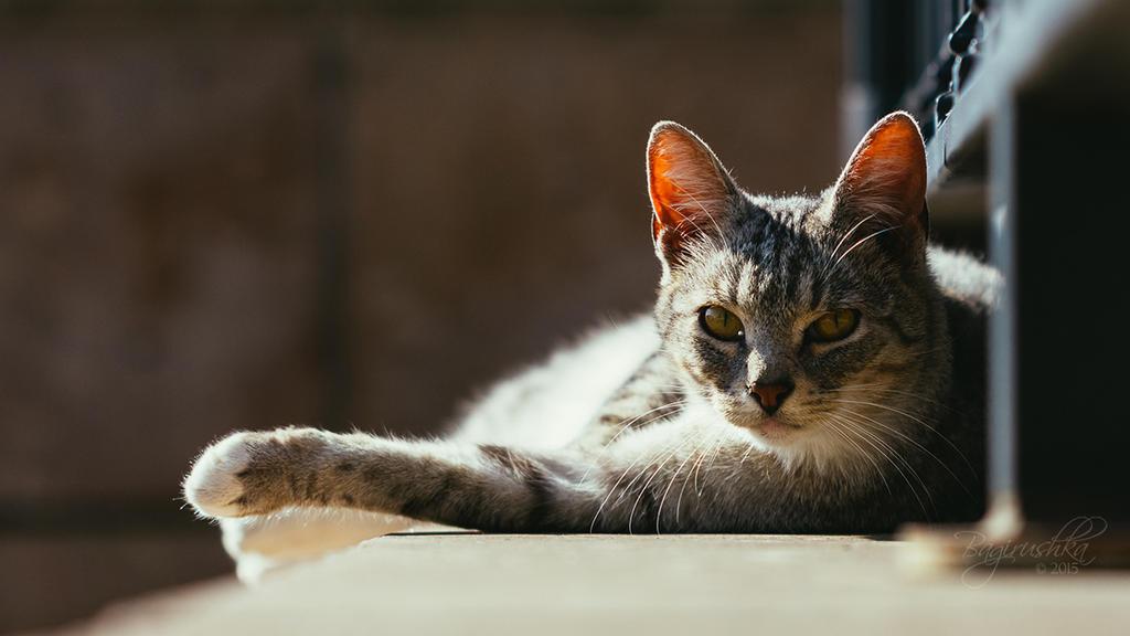 Resting Cat by Bagirushka