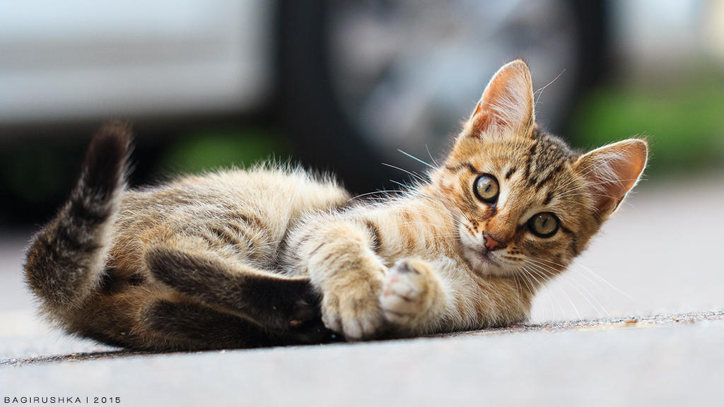 Playing Kitty by Bagirushka