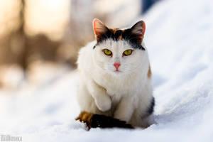 Calico cat by Bagirushka