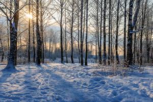 snow morning by Bagirushka