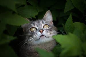 Like The Cheshire Cat by Bagirushka