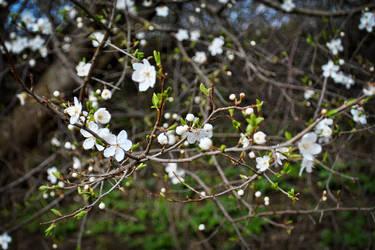 in bloom by harley-daniels