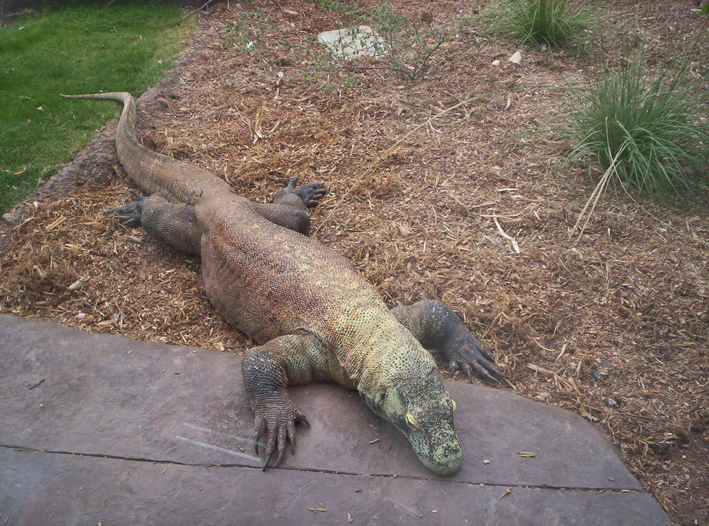 Close Enough At Phoenix Zoo by donna-j