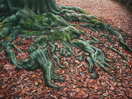 Nature's magic by Raipun