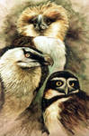 birds of prey by Raipun