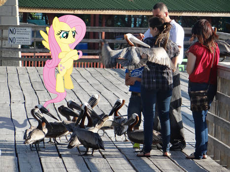 Fluttershy Attacking Tourists