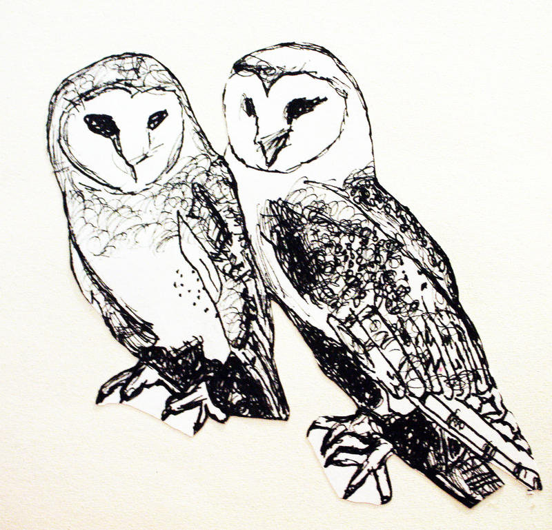 Barn Owl Drawing In Pen By SilverShadow17