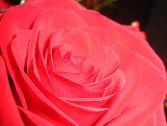Bloom by kali-shiva-aum