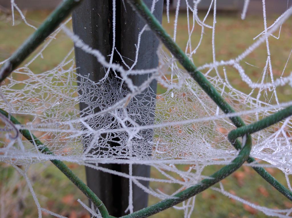 Frozen Cobweb 2 by J-Felix