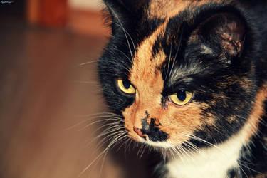 Cat^^ by Izi-chan