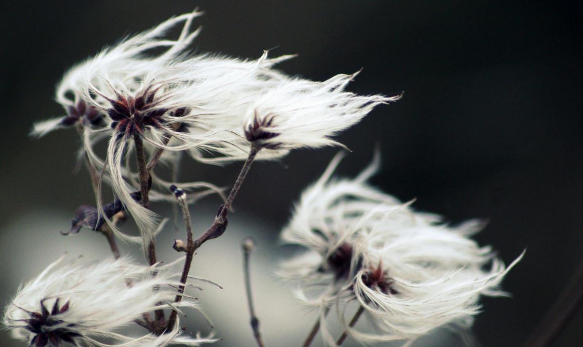 wind by HAYNSRT
