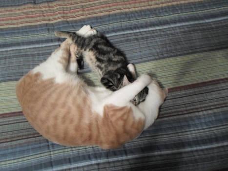 fuzzy snuggles