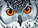 Eagle Owl acrylic painting