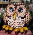 Funny little Screech Owl