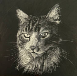 Scratchbord Drawing of a Cat