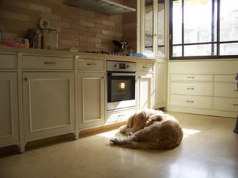 Dog and Kitchen by blackest-eye
