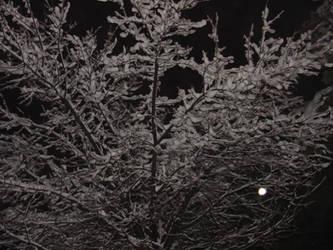 frozen Tree by blackest-eye