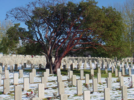 white grave yard
