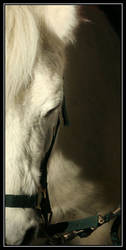 White Horse by Kristophe