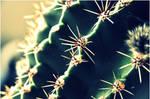 cactus by JouKatsOlen