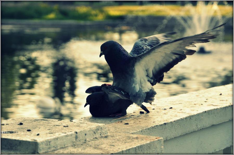 Pigeons by JouKatsOlen