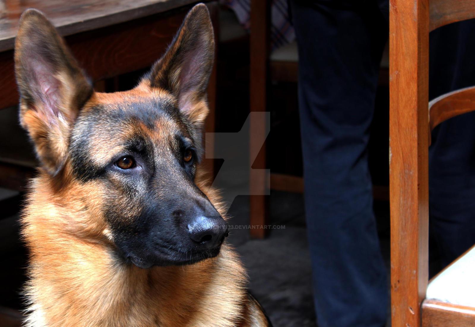 Watch Dog Iso