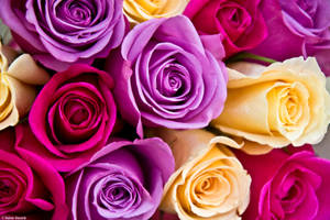 Bouquet of Color by kmkessick